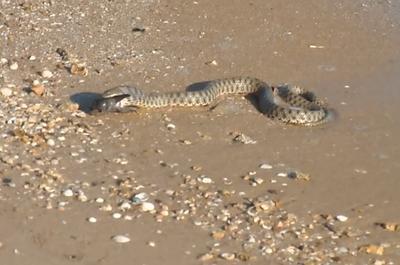 Змеи. Азовское море
