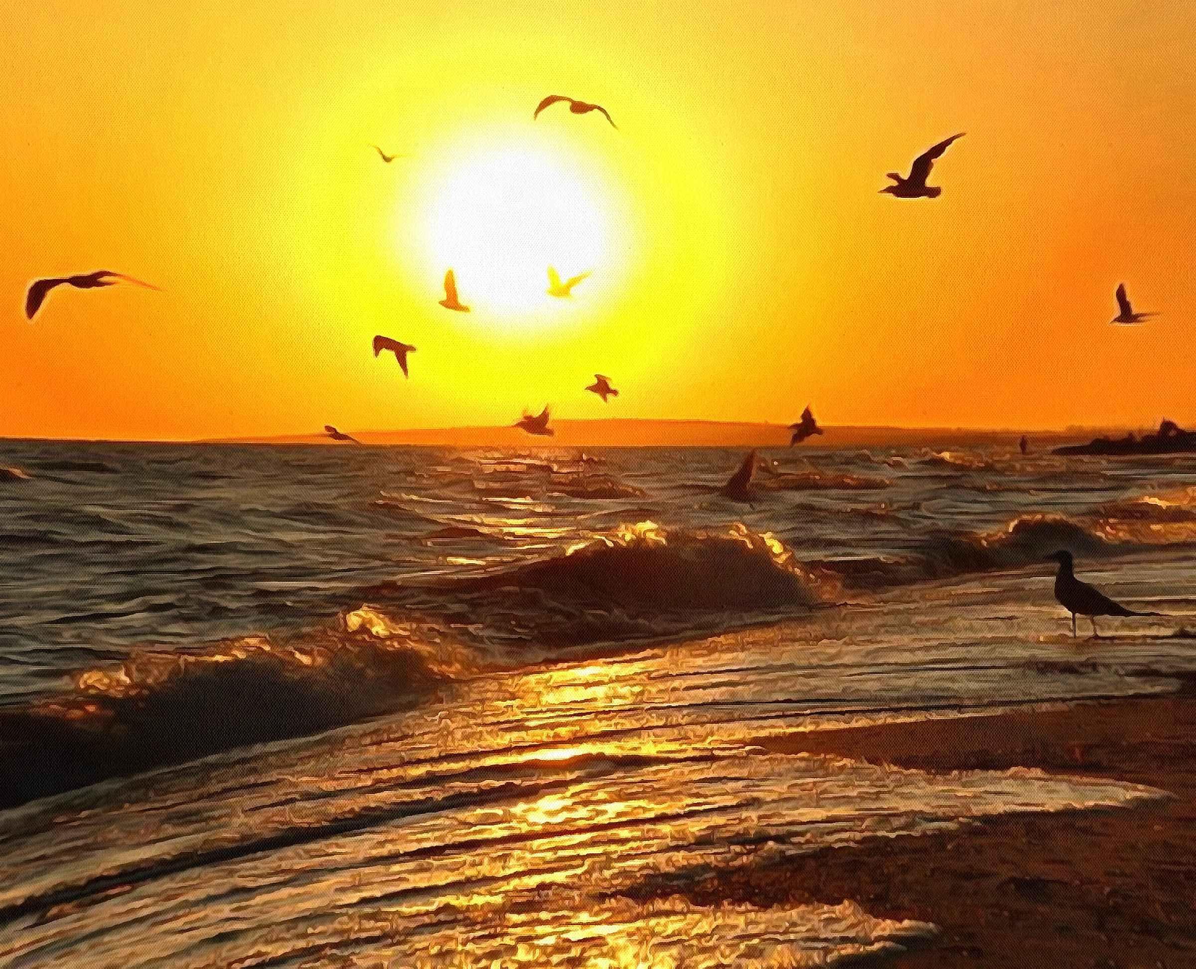 Азовское море. Чайки на Азовском море