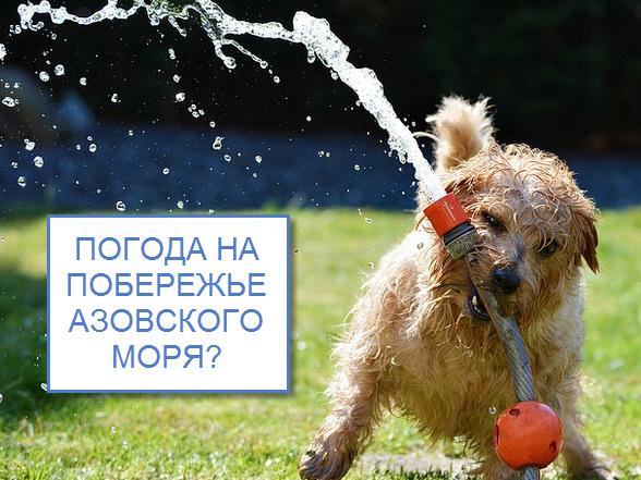 Температура воды в Азовском море.