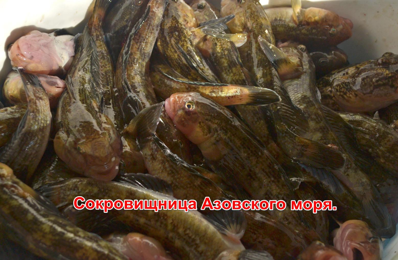 Бычок Азовский.