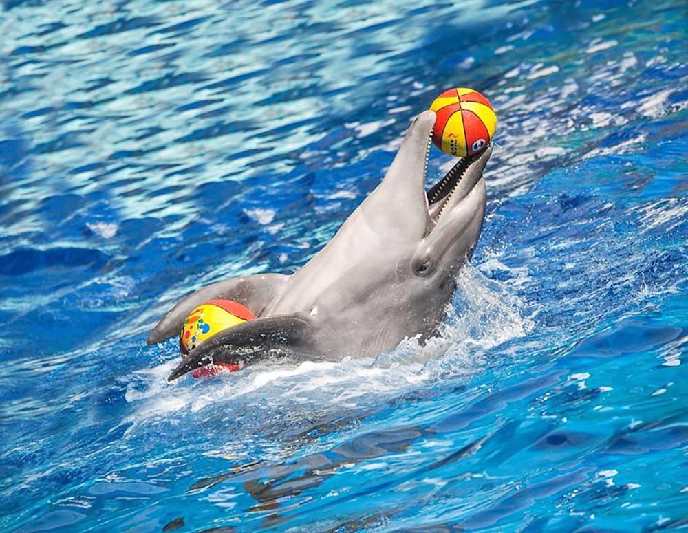 Дельфинарий Кирилловка. Отдых на море.