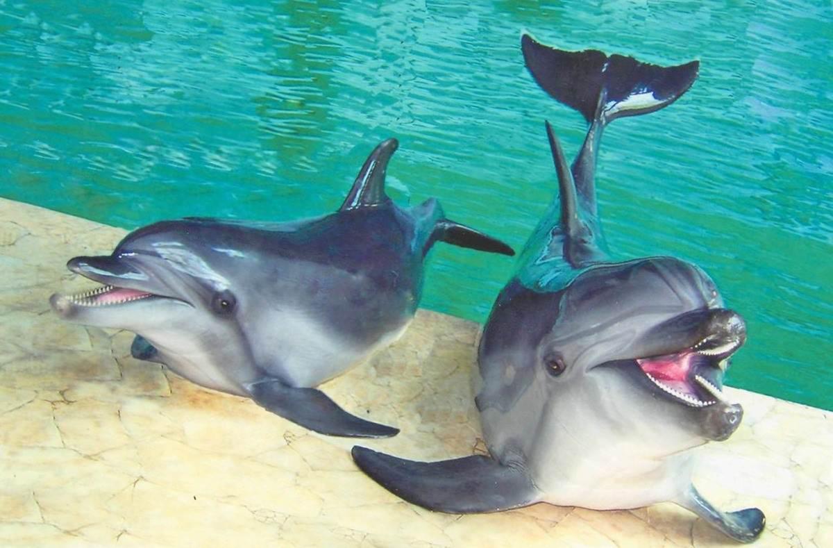 Дельфинарий в Кирилловке. Отдых на Азовском море.