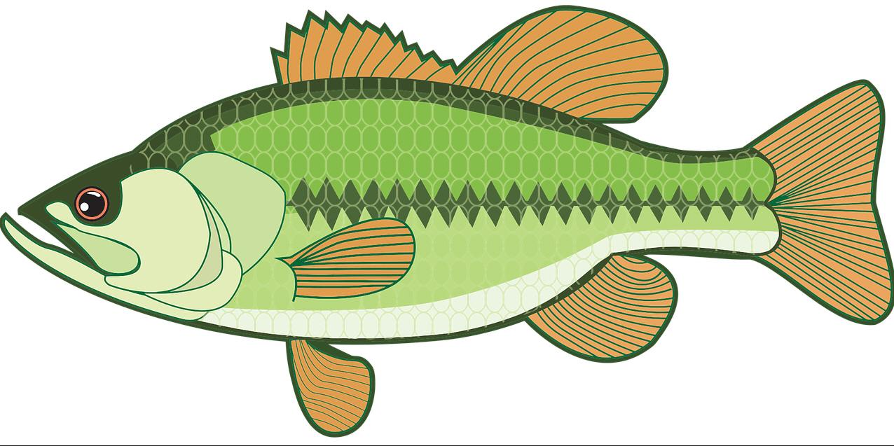 рыба азовское море