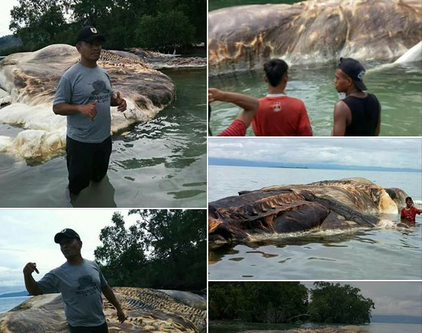 В Индонезии на берег выкинуло гигантское неизвестное существо.